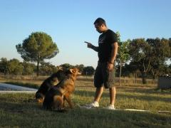 Foto 9 animales y mascotas en Badajoz - Adiestramiento Canino Irecan
