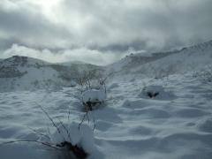 Vi�edos nevados - garcia de verdevique
