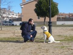Entrenando perros de asistencia