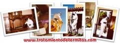 Eliminar termitas, carcomas. Tratamientos termitas, carcomas