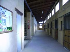 Foto 18 animales y mascotas en Palencia - Equibalance
