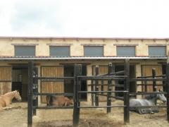 Foto 15 animales y mascotas en Palencia - Equibalance