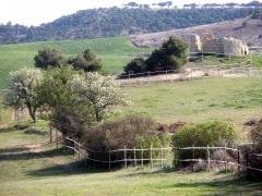 Foto 19 animales y mascotas en Palencia - Equibalance