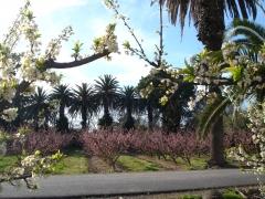 Floracion frutales hacienda la vara 01