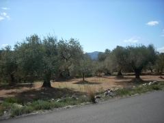 Rossell - finca en producci�n 1.731 m2. agua camino asfaltado 5.000 euros