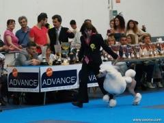 Exposicion canina  internacional celebrada en la población de valls 2010  finales