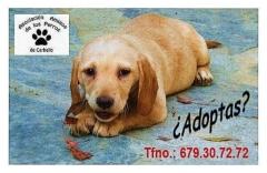Foto 20 animales y mascotas en A Coruña - Asociación Protectora de Animales Amigos de los Perros de Carballo