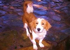 Foto 21 animales y mascotas en A Coruña - Asociación Protectora de Animales Amigos de los Perros de Carballo