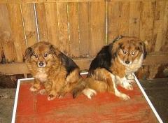 Foto 22 animales y mascotas en A Coruña - Asociación Protectora de Animales Amigos de los Perros de Carballo