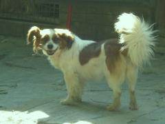Foto 23 animales y mascotas en A Coruña - Asociación Protectora de Animales Amigos de los Perros de Carballo