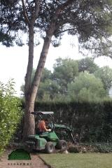 Excavaci�n mecanica tocones arboles castellon