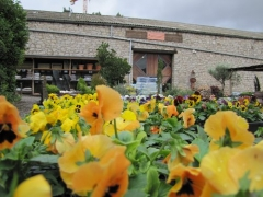 Agriplant huguet centro de jardineria calaf barcelona