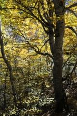 158 - otoño en el valle de arán