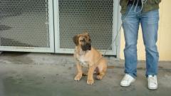 Educaci�n Diego y su cachorro de Fila Brasileiro
