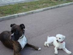Baldo y Tot�, 2 majos perros que reciben el servicio de Paseos