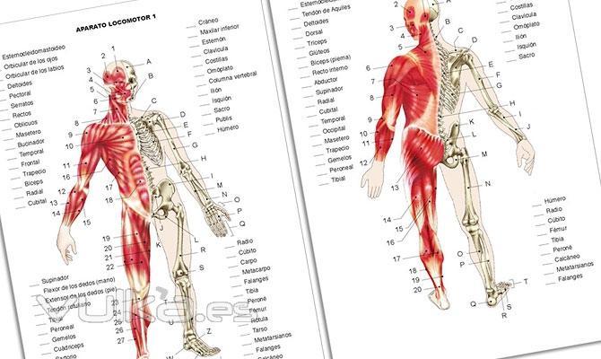 Foto: Atlas de ejercicios prácticos de anatomía humana. Nivel 1º ESO