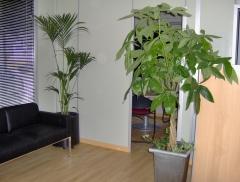 Mantenimiento de plantas de interior