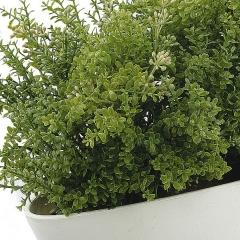 Planta artificial leucalendron verde grande en lallimona.com detalle1