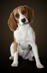 Fotografía profesional de mascotas. consúltame en www.artefoto.net