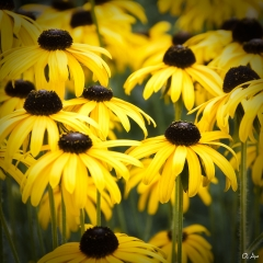 Lámina en venta. consulta más variedad y precios en www.artefoto.net