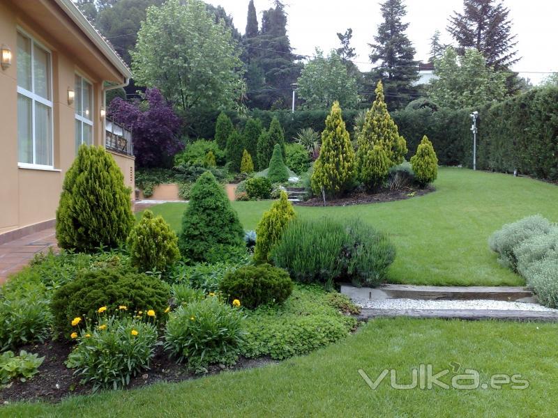 Foto proyecto paisajismo en algete for Tipos de pinos para jardin fotos