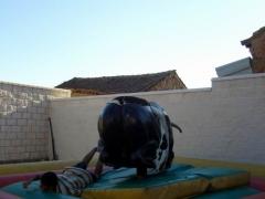 Caida en plancha de toro mecanico elias park