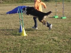 Adietramiento san sebastian,guipuzcoa, agility asoc. noble y fiel amigo anfa enero 2011