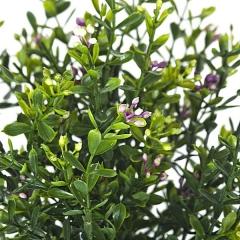 Planta artificial hebe en lallimona.com detalle2