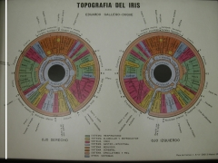 Mapa iridol�gic