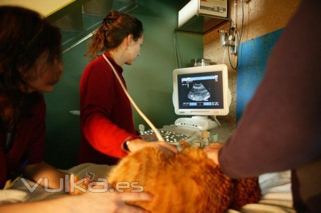 ecograf�a abdominal