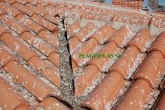 Gran acumulaci�n de excrementos de palomas en tejado