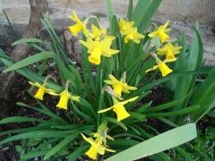 Primavera en imón
