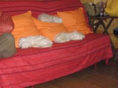Residencia Canina Madrid-VORAN