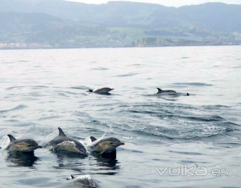 Avistamiento de cetáceos junto a Izaro