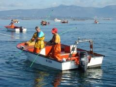 Nosotros mismos capturando el marisco para sus pedidos.