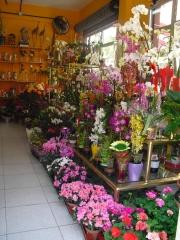 Foto 201 servicios funerarios - Floristeria la Camelia (santa Cruz de Tenerife)