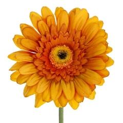 Flor artificial gerbera naranja 60 en lallimona.com
