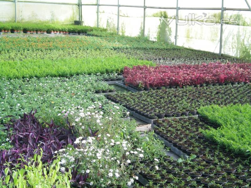 Viveros en malaga villalobos o a for Viveros de plantas