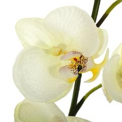 Rama artificial flores orquideas crema pequeñas con hojas en lallimona.com (detalle 2)