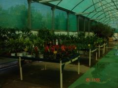 Plantas de temporada, interior, flores, etc