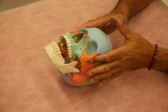 Osteopatía craneal. escucha de índices en alas mayores