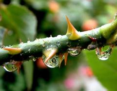 Homeopatia madrid y tratamiento del dolor
