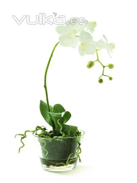 Foto orquideas de calidad maceta cristal con - Maceta para orquideas ...