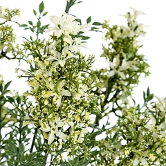 Ramas artificiales flores bush mini crema en lallimona.com (detalle 1)