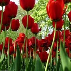 Flores a domicilio en malaga
