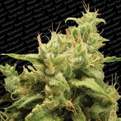 Grow shop, tienda de marihuana, semillas de marihuana, interior, exterior, sustratos, fertilizantes,