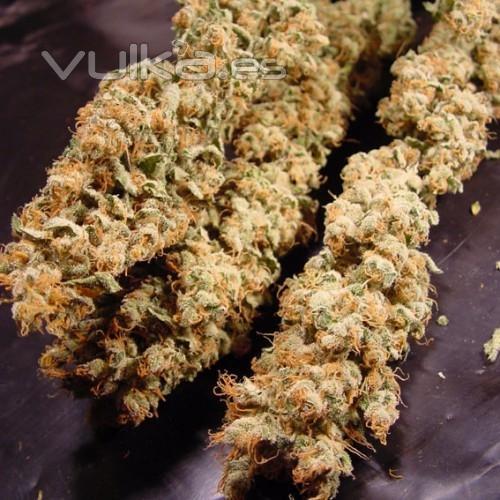 Foto grow shop tienda de marihuana semillas de marihuana interior exterior sustratos - Semillas de interior ...