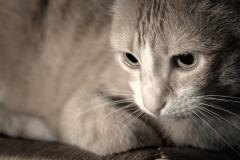 Fotograf�a profesional de mascotas. consulta precios en www.artefoto.net