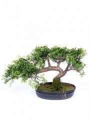 Bonsais artificiales de calidad. bonsai leucadendron artificial oasisdecor.com