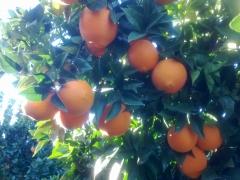 Naranjas vila - foto 21